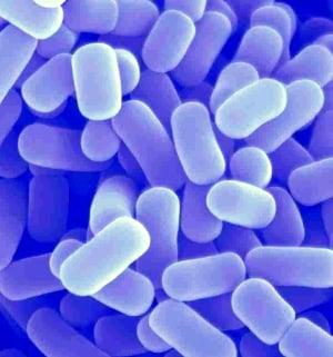 Пробиотик Ветом 1.1 в капсулах