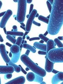 Пробиотик Ветом 3 в капсулах