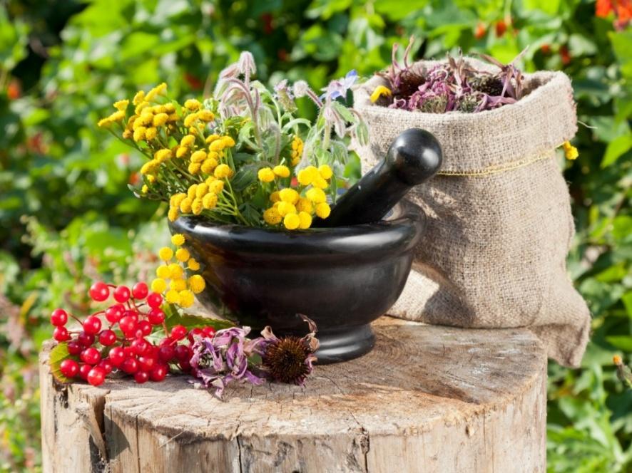 Сила российских трав чай для повышения иммунитета