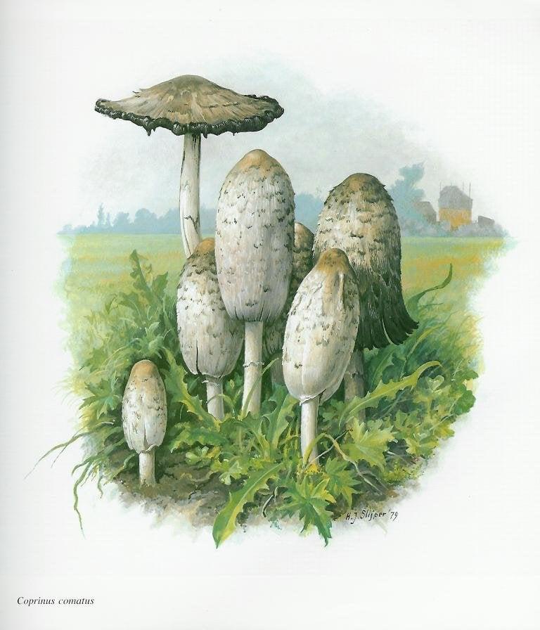 Необычные факты о грибах фото что